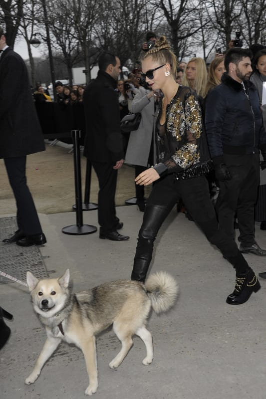 Cara Delevingne and her dog arrive at the Chanel show during Paris Fashion Week Haute Couture Spring/Summer 2016