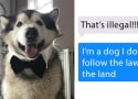 Malamute Goes on Tinder, Becomes Most Sought After Date EVER