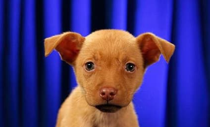 Puppy Bowl VIII Starting Lineup: Revealed, Super Cute!