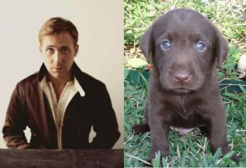 Ryan Gosling vs. Puppy