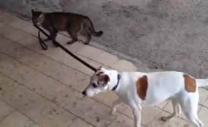 Cat Walks Dog Home, World Turned Upside Down