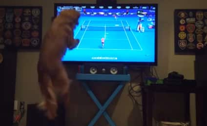 This Dog Loves Tennis More Than We Love Anything
