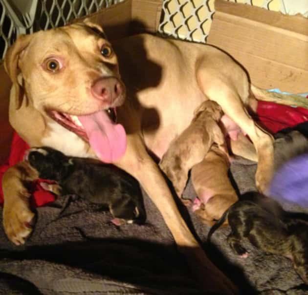 Ian Somerhalder Dog, Puppies