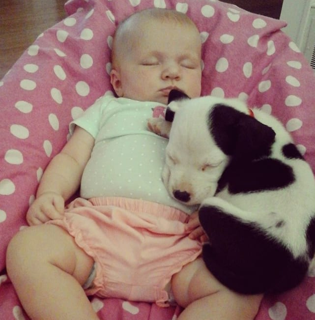 baby and pit bull photos adorable bffs the hollywood