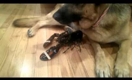 Dog Protects Pet Lobster from Becoming Dinner