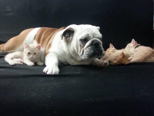 Adorable Animal Family
