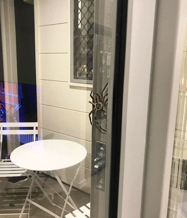 Enormous Spider Stalks Couple, Scares Bejeebus Out of Internet
