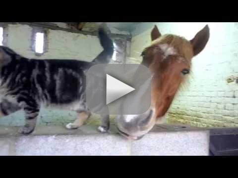 Horse and Cat Snuggle