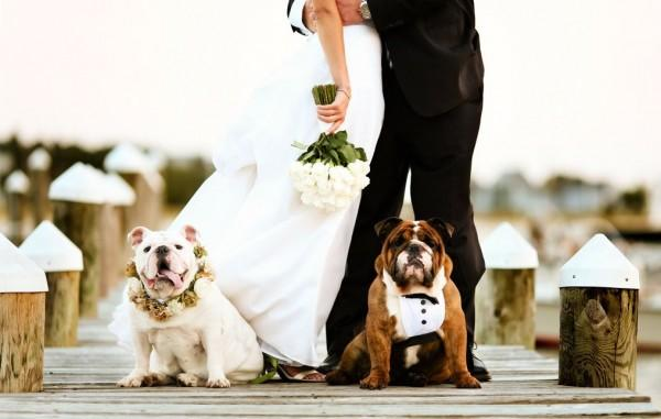 No dogs in my wedding!