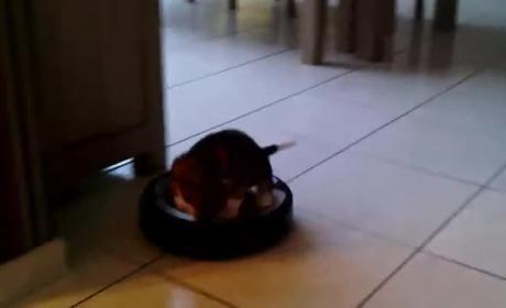 Puppy Rides Roomba