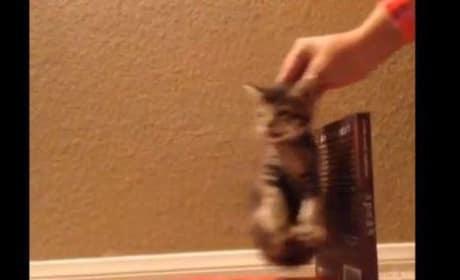 """Cat Parodies """"Wrecking Ball"""""""