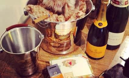 13 Dogs Who Live a Totally Baller Lifestyle