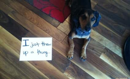 21 Dogs Who Have Been Publicly Shamed: Hide Your Thong!