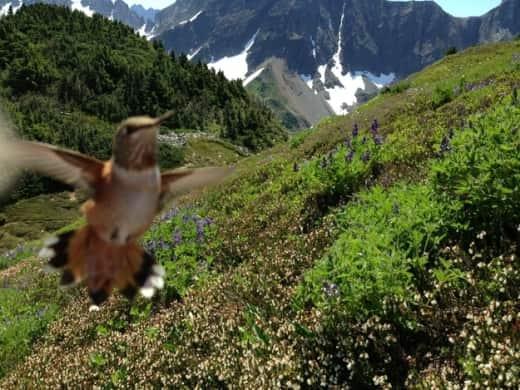 Hummingbird Photobomb
