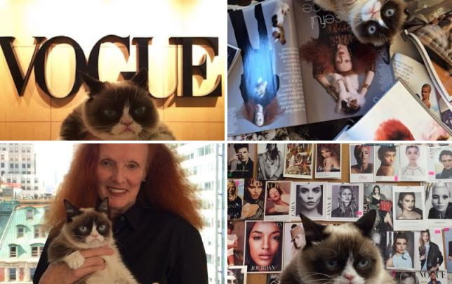 Grumpy cat at vogue