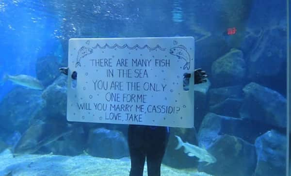 If You're a Fish, I'm a Fish
