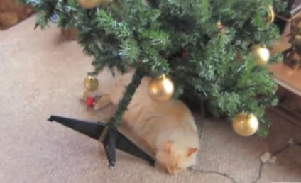 Cats Ruin Christmas in Cute, Destructive Holiday Mashup