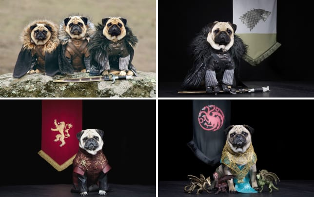 Dogs dress like game of thrones characters robb stark ned stark and jon snow