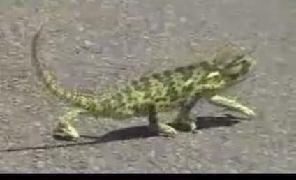 """Dancing Lizard Gets Down to """"In Da Club"""""""
