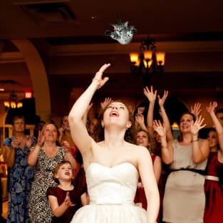 Bride Throwing Cat: Meme 7