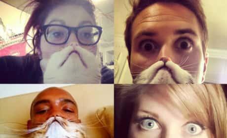 Cat Bearding Photos