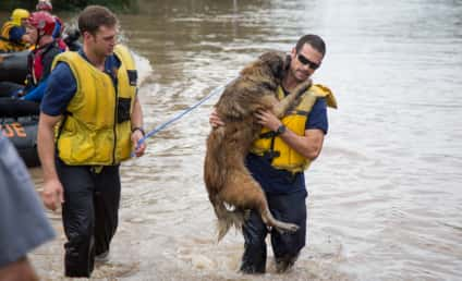 Firefighters Rescue Dog from Austin Flood, Carry Grateful Canine to Safety