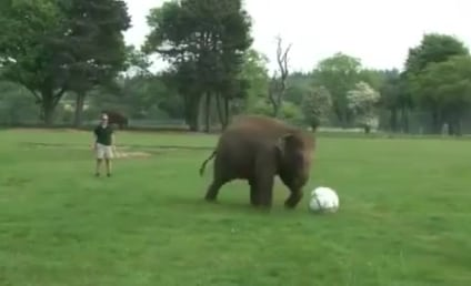 Baby Elephant Plays Soccer, World Collectively Smiles