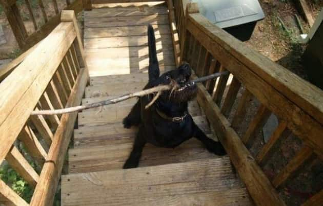 Stick Meets Stairs