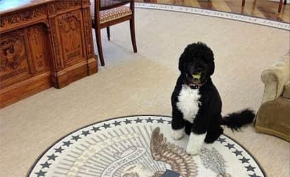 White House Makes Like Mean Girls, Tells Off Bo