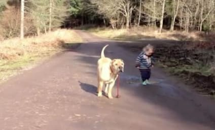 Toddler Plays in Puddle, Dog Waits Patiently