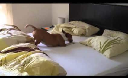 Dog Jumps Into Bed, FLIPS THE EFF OUT