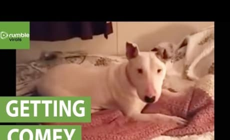 Rescue Dog Experiences Pure Joy of Very Own Bed