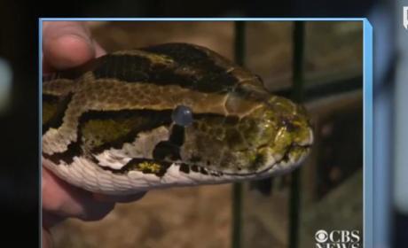 Python Kills 2 Boys in Canada