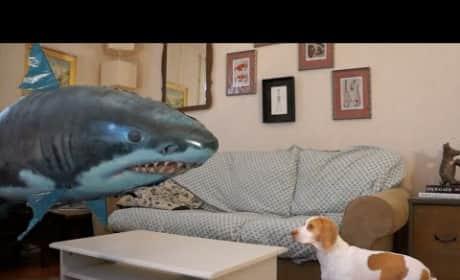 Dog Fights Off Sharknado