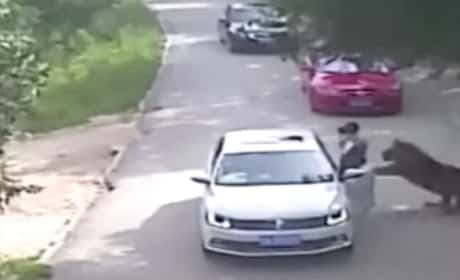 Tiger Mauls Woman to Death in China