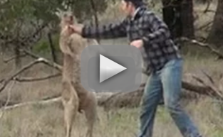 Man Punches Kangaroo, Saves Dog in Australia