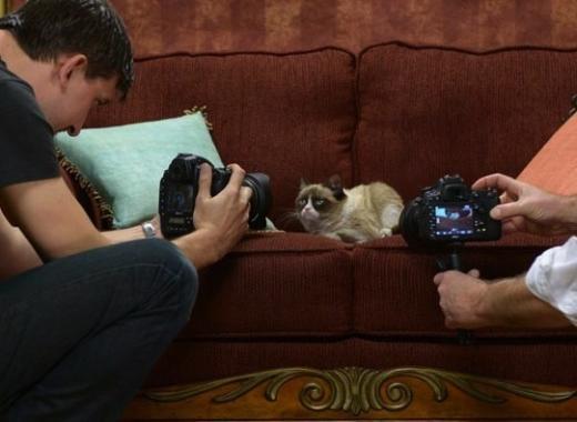 Grumpy Cat Photo Shoot