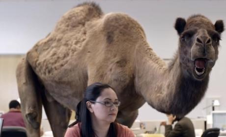 "School Bans Saying of ""Hump Day"""