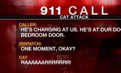 Family Calls 911 Over Ferocious Feline: He's Charging Us!