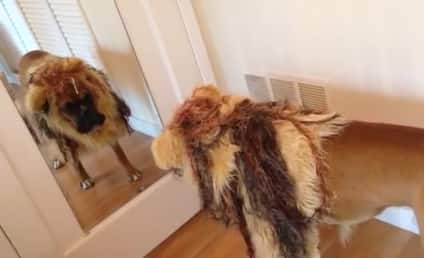 Dog Gets Dressed as Lion, Barks at Self in Mirror