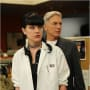 Mark Harmon and Pauley Perrette