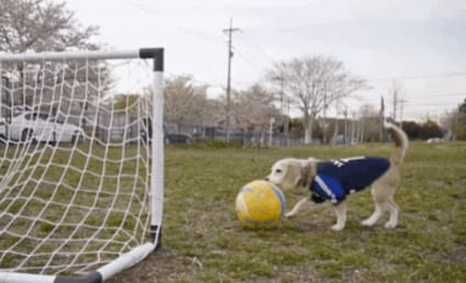 Dog Has World Cup Fever, Excels at Soccer