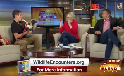 Skunk Handler Pulls Epic Morning TV Prank