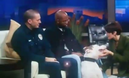 Dog Bites News Anchor's Face on Live TV