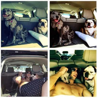 Michael Phelps, Dogs