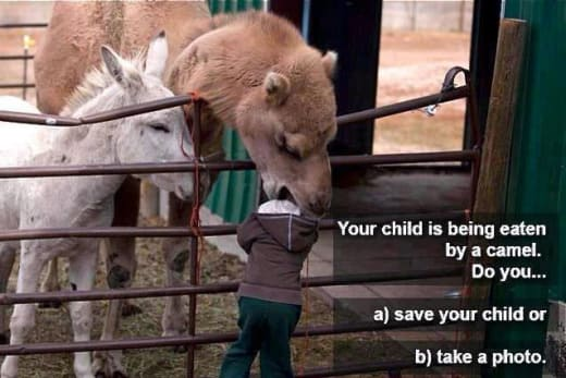 Camel Eating Kid