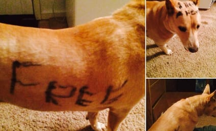 Abandoned Dog with Graffiti Across Body Finds Home, Happiness