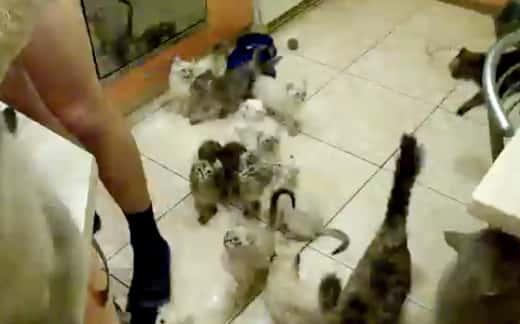 INSANE Cats