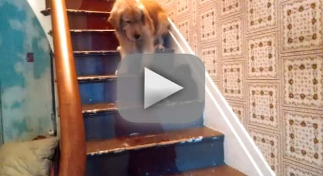 Dog Fears Cat, Stairs