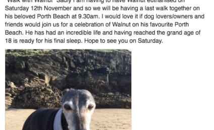 Dying Dog Draws Giant, Inspiring Crowd for Final Walk